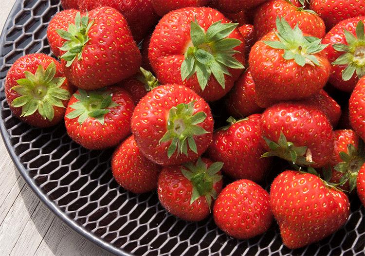 Erdbeeren frisch vom Feld
