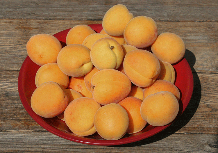 Eine Schale mit Aprikosen