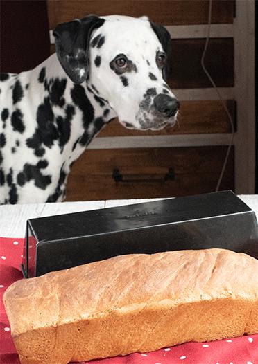 Toastbrot mit Hund